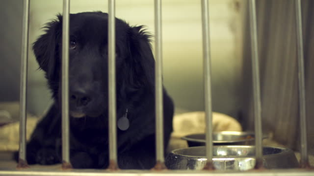 Sad dog caged in animal shelter