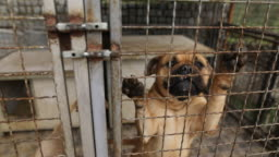 Sad dogs in shelter behind fence waiting to be rescued and adopted to new home