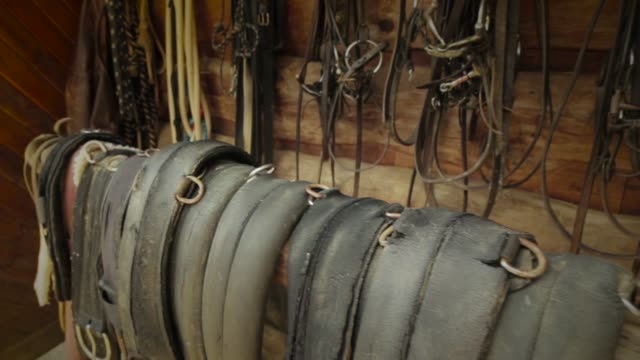 saddle girth - bridle stock videos & royalty-free footage