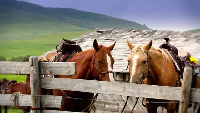 Saddle horses tied off at corral