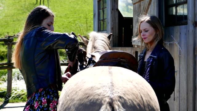 vídeos de stock e filmes b-roll de saddle in the hands of befriended women, combing the horse together. - fazer um favor