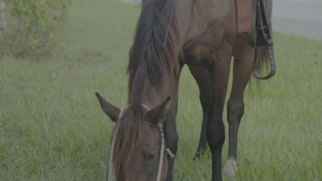 Saddled horse grazing on grass