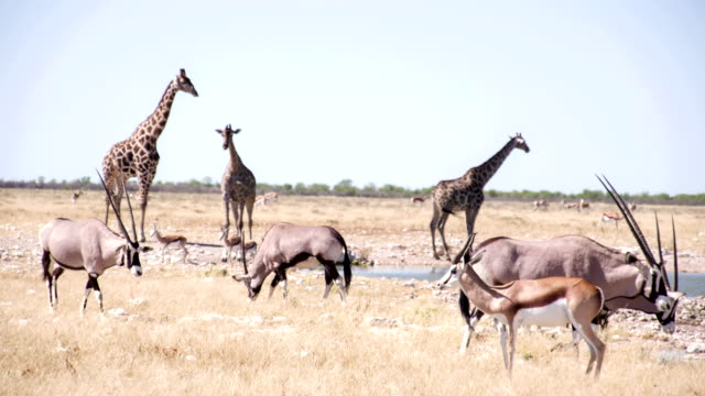 LS Safari Animals By The Waterhole