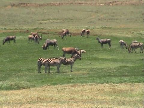 safari animals - safari animals stock videos & royalty-free footage