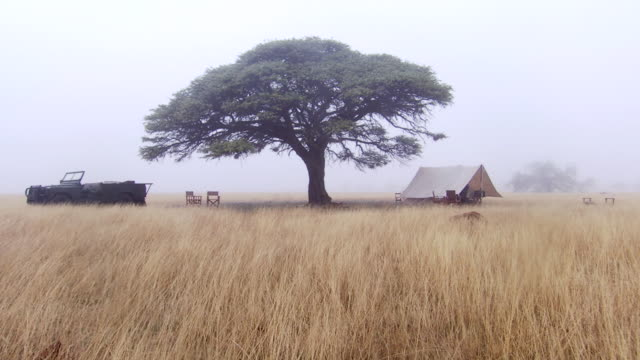 WS Safari camp in mist on cloudy day / Lindberg, North west, South Africa