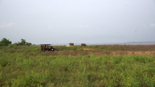 ms safari vehicles in open field,sri lanka - wildlife reserve stock videos & royalty-free footage