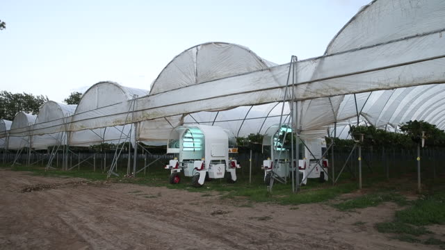 saga robotics' thorvald robot completes a uv-c treatment on strawberries inside a polytunnel at clock house farm ltd, in coxheath, maidstone, kent,... - robotics stock videos & royalty-free footage