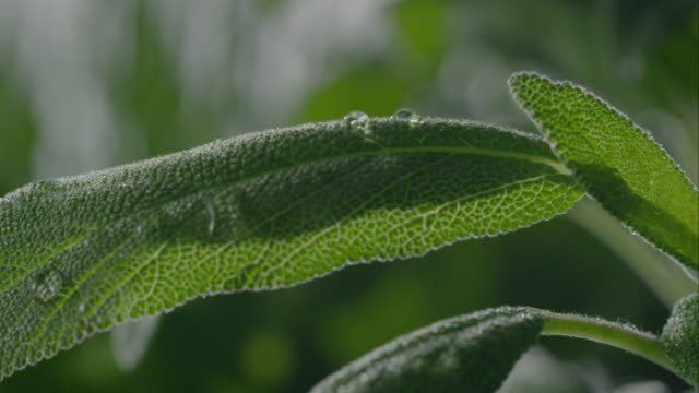 sage and basil plant - chive stock videos & royalty-free footage
