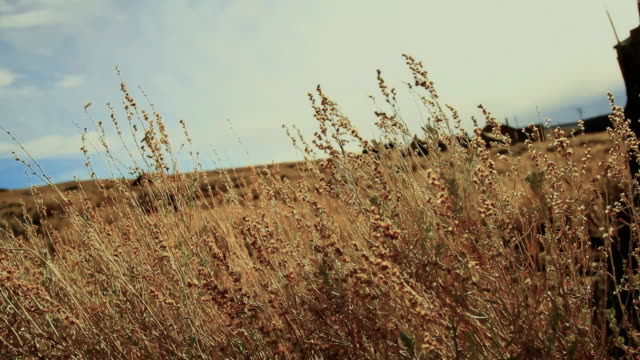sage blows in wind. - horse cart stock videos & royalty-free footage