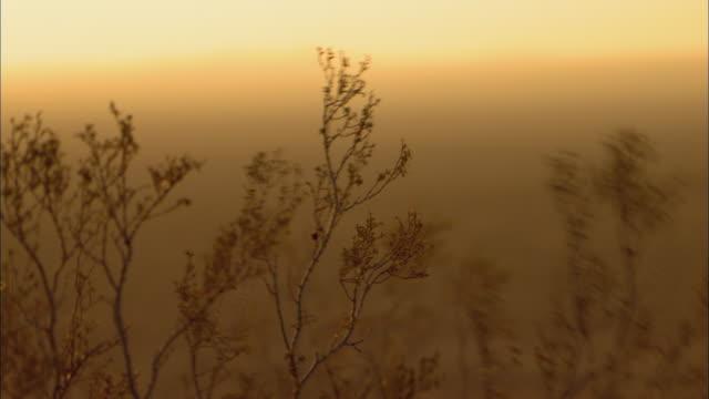 cu selective focus sagebrush branches blowing in wind in mojave desert / california, usa - deserto mojave video stock e b–roll