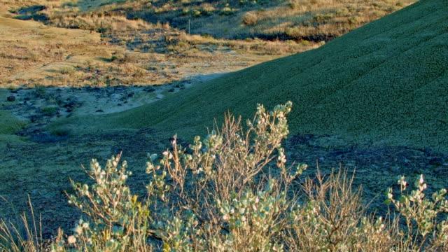 sagebrush painted hills oregon 29 - セージブラッシュ点の映像素材/bロール