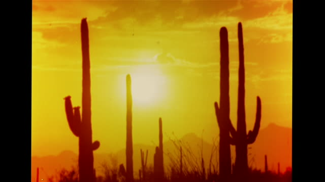 Saguaro cacti in silhouette white hot sun in orange sky CU Four doves perching on tree branch WS PAN Desert landscape cacti shrubs mountains PB arid...