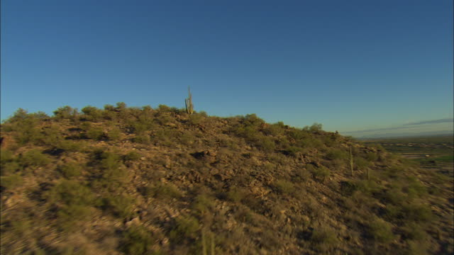 AERIAL Saguaro cactus covered hill, young man sitting in distance, Tucson, Arizona, USA