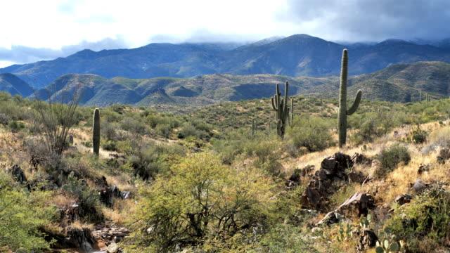 サグアロサボテン砂漠、ツーソン、アリゾナ州 - ガラパゴスウチワサボテン点の映像素材/bロール