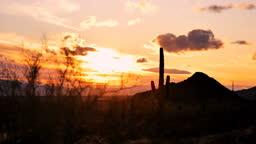 Saguaro cactus desert, Tucson, Arizona