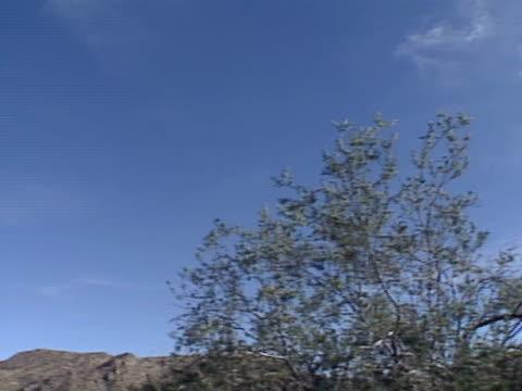 a saguaro cactus grows near phoenix arizona - saguaro cactus stock videos & royalty-free footage
