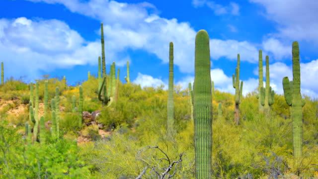 Saguaro Cactus Habitat