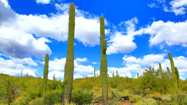 saguaro cactus habitat - barrel cactus stock videos and b-roll footage