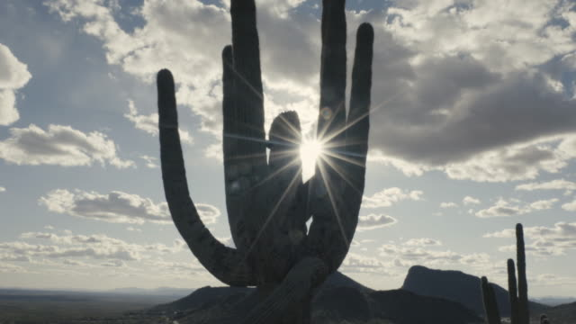 saguaro cactus - arizona cactus stock videos & royalty-free footage