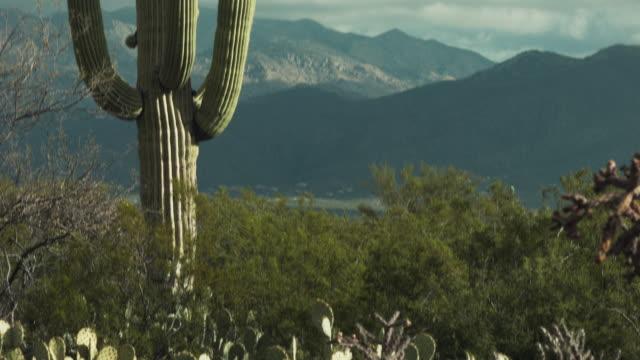 Saguaro Desert National Park