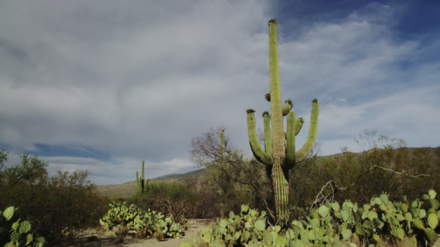 saguaro national park - arizona stock-videos und b-roll-filmmaterial