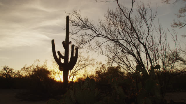 saguaro national park - cactus sunset stock videos & royalty-free footage