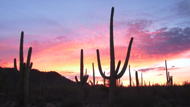 saguaro sunrise - arizona cactus stock videos & royalty-free footage