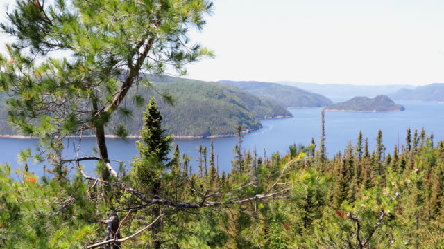 saguenay landscape fjord national park, quebec, canada - simple living stock videos & royalty-free footage