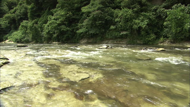 sai river in kanazawa, japan - ishikawa prefecture stock videos and b-roll footage
