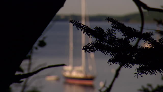 ms, r/f, sailboat moored in harbor, pine tree branch in foreground, rockport, maine, usa - rockport maine stock videos & royalty-free footage