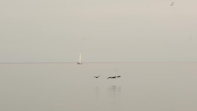 segel båt på ontario lake, rad av fåglar går hem 。 - norra stilla havet bildbanksvideor och videomaterial från bakom kulisserna