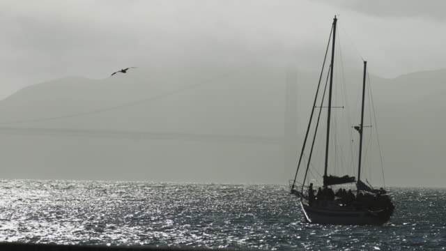 sailing boat and the golden gate bridge in san francisco - regatta stock videos & royalty-free footage