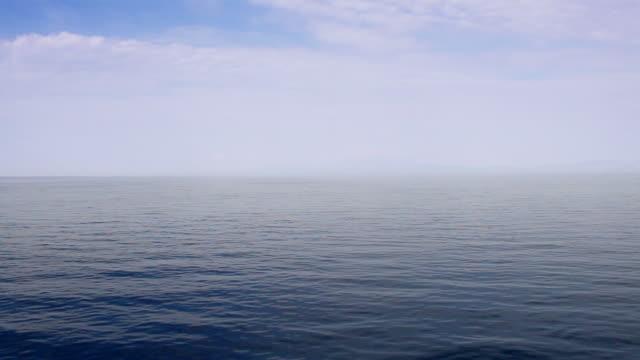 barca a vela - gruppo medio di animali video stock e b–roll