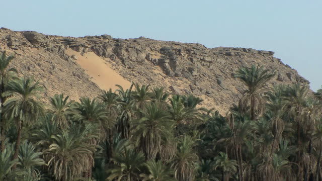 POV Sailing by palm groves with rocky desert mountain on background, Aswan, Egypt