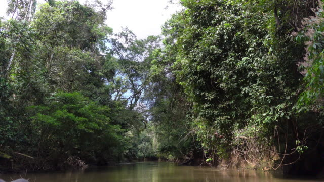 sailing on the cuyabeno reserve of amazon basin. - ecuador stock videos & royalty-free footage