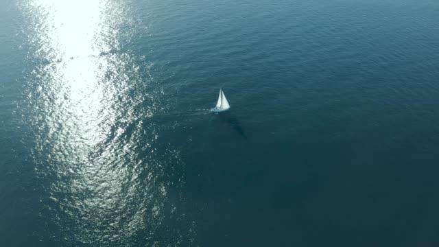 vídeos y material grabado en eventos de stock de sailing to the ocean - velero