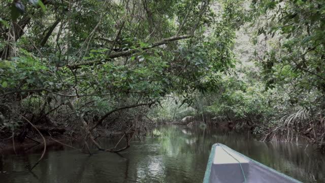 stockvideo's en b-roll-footage met varen met de kano in de cuyabeno-rivier. - ecuador