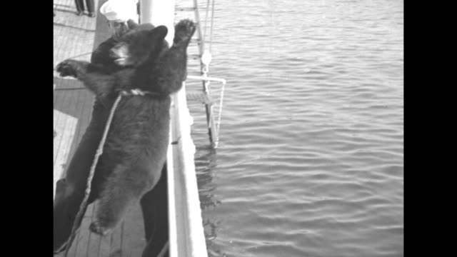 us sailor wearing insignia of special warfare operator first class stands on ship deck with minesweeper uss grebe mascot scrappy a small bear with a... - minesweeping stock videos & royalty-free footage