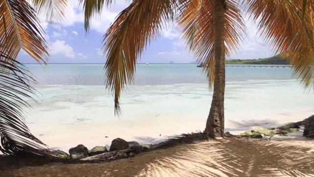 vidéos et rushes de sainte anne beach on the tropical island of martinique. - martinique
