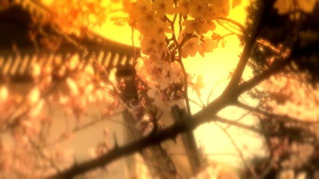 sakura and castle film effect (anamorphic dv) - anamorphic stock videos & royalty-free footage