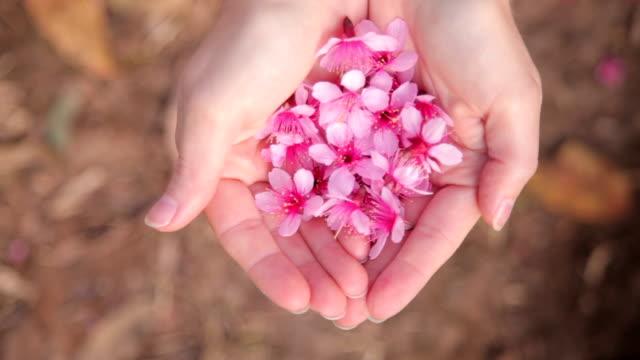 vídeos de stock, filmes e b-roll de pétalas de flor de cerejeira sakura da mulher de mãos - pétala