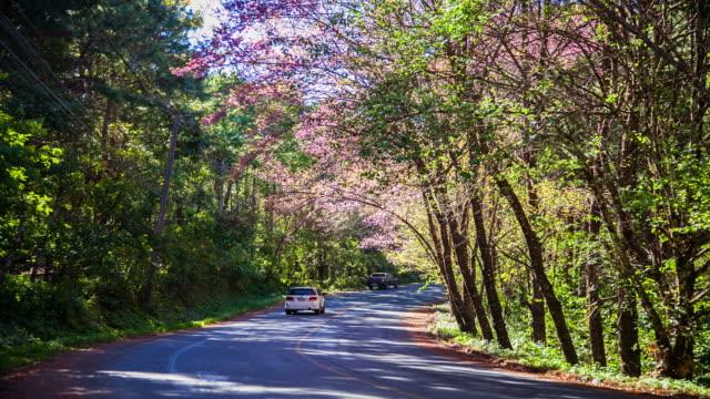 Sakura-Straße.