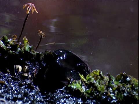 salamander leaves primordial swamp - swamp stock videos & royalty-free footage