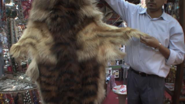vidéos et rushes de ms tu td salesman showing unusual tiger skin at mutrah suk, muscat, oman - un seul homme d'âge moyen