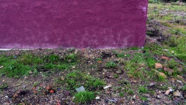 vídeos y material grabado en eventos de stock de salidas al campo tuta - pared de cemento