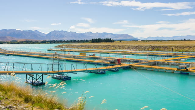 salmon farms, new zealand - seafood stock videos & royalty-free footage