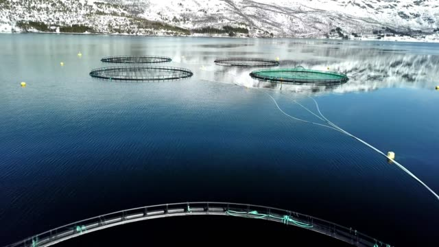 salmon fishing farm in norway - saltwater fish stock videos & royalty-free footage