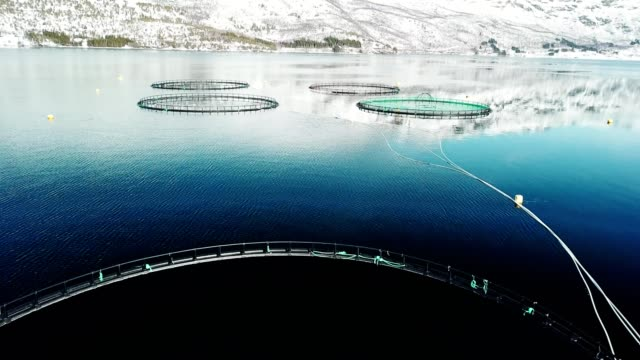 salmon fishing farm in norway