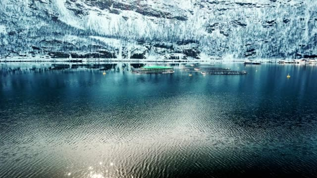 salmon fishing farm in norway - cage stock videos & royalty-free footage