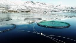salmon fishing farm in norway